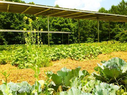 Dupla aratás napelemmel